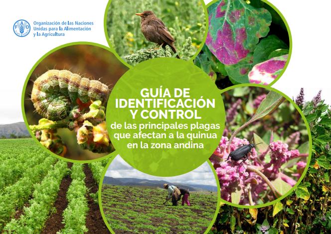 Guia-de-identificación-de-plagas-y-enfermedades-de-la-quinua-pdf