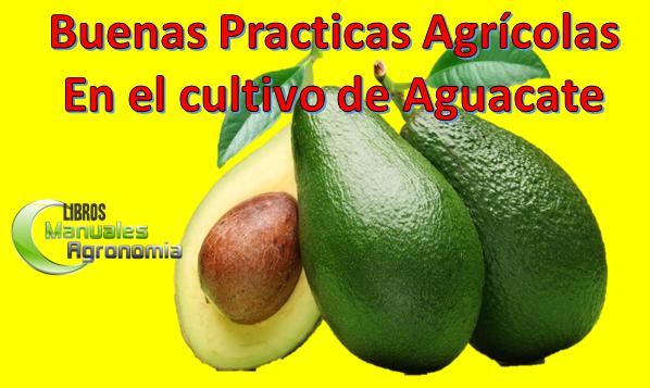 Buenas practicas agricolas del cultivo de Aguacate (Palto). pdf gratis