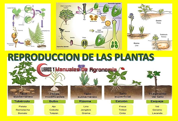 Proceso de REPRODUCCIÓN DE LAS PLANTAS