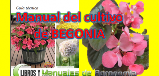 Manual del cultivo de BEGONIA. Libros gratis pdf