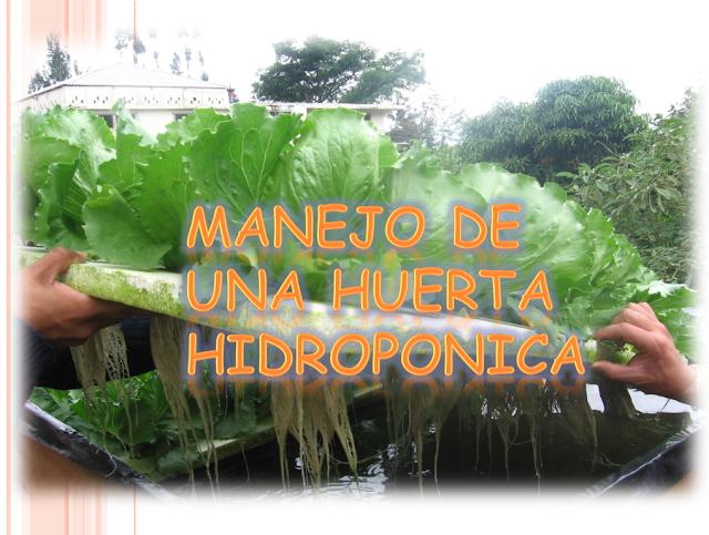 Manual Manejo de una huerta hidroponica.- Descargar gratis libros de agronomia