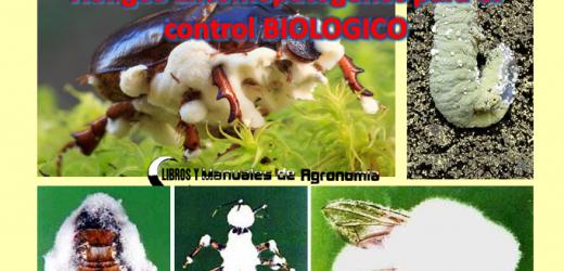 Hongos Entomopatógenos para Control Biológico