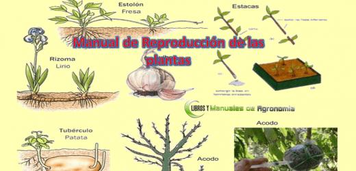 Manual de Reproducción de la plantas. Libros gartis