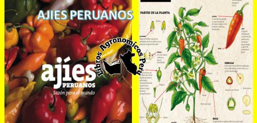 Libros gratis: Ajíes Peruanos. pdf gratis