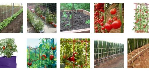 Manual de entutorado del tomate. pdf gratis