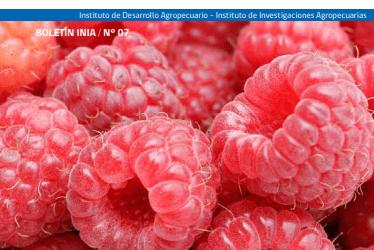 Manual del Cultivo de Frambueso. pdf gratis
