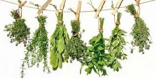 Fitoterapia: tratar con plantas medicinales